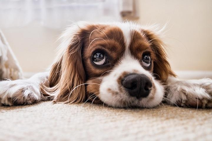 Sad dog waiting